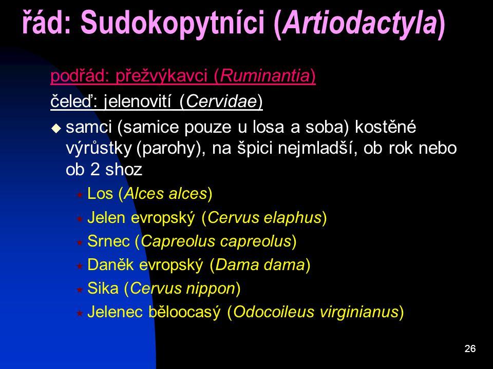 26 řád: Sudokopytníci ( Artiodactyla ) podřád: přežvýkavci (Ruminantia) čeleď: jelenovití (Cervidae)  samci (samice pouze u losa a soba) kostěné výrů