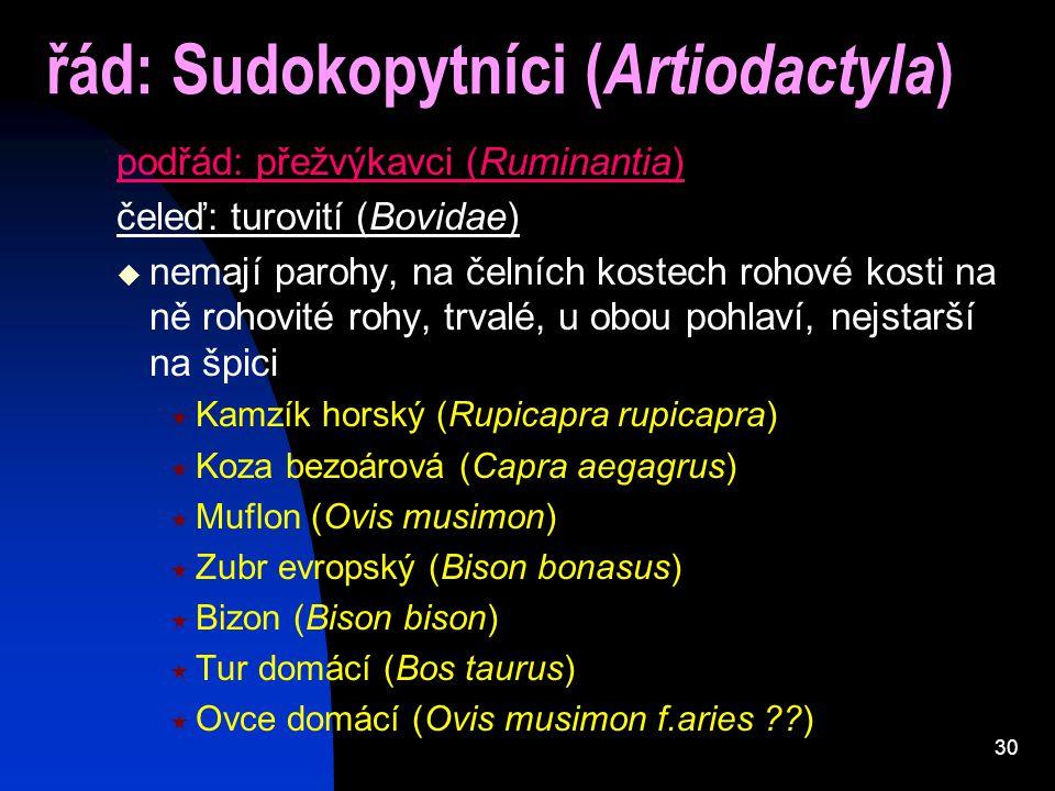 30 řád: Sudokopytníci ( Artiodactyla ) podřád: přežvýkavci (Ruminantia) čeleď: turovití (Bovidae)  nemají parohy, na čelních kostech rohové kosti na ně rohovité rohy, trvalé, u obou pohlaví, nejstarší na špici  Kamzík horský (Rupicapra rupicapra)  Koza bezoárová (Capra aegagrus)  Muflon (Ovis musimon)  Zubr evropský (Bison bonasus)  Bizon (Bison bison)  Tur domácí (Bos taurus)  Ovce domácí (Ovis musimon f.aries ??)
