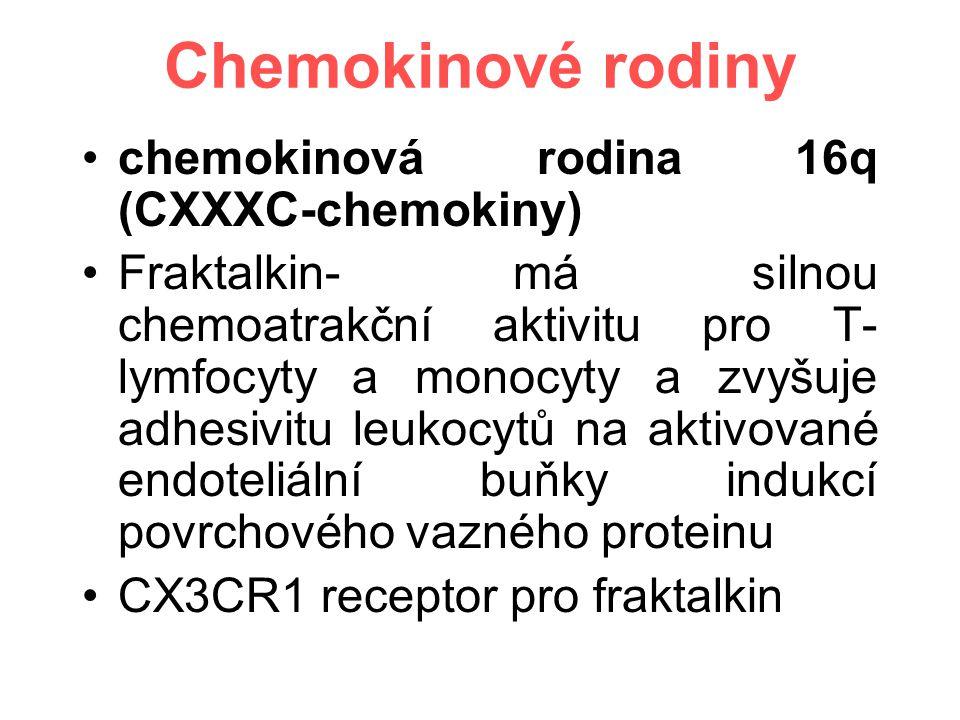 Chemokinové rodiny chemokinová rodina 16q (CXXXC-chemokiny) Fraktalkin- má silnou chemoatrakční aktivitu pro T- lymfocyty a monocyty a zvyšuje adhesivitu leukocytů na aktivované endoteliální buňky indukcí povrchového vazného proteinu CX3CR1 receptor pro fraktalkin