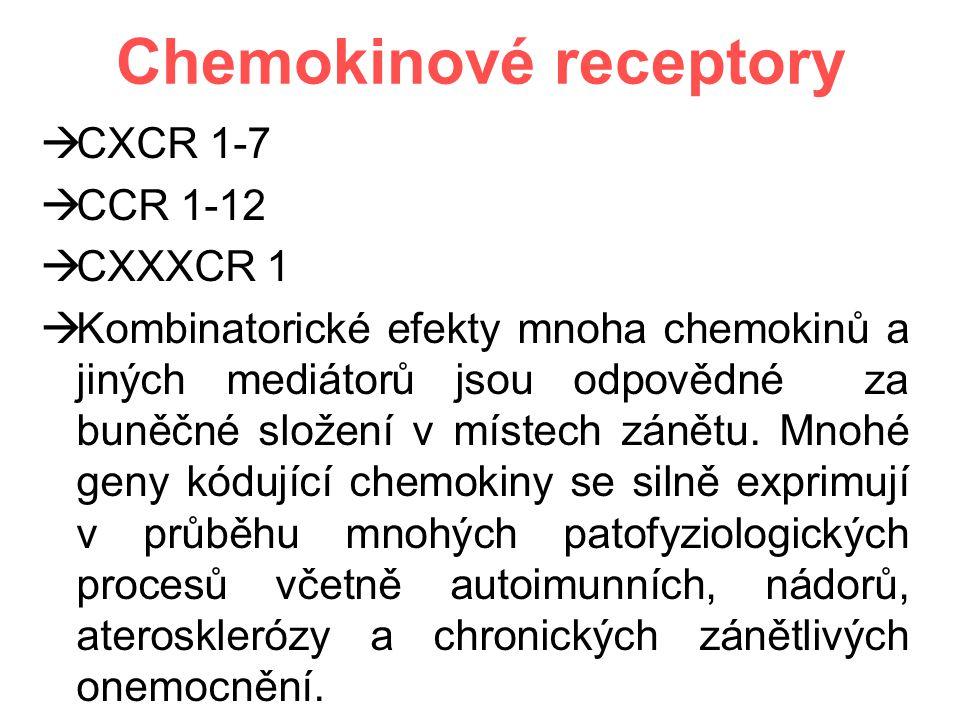 Chemokinové receptory  CXCR 1-7  CCR 1-12  CXXXCR 1  Kombinatorické efekty mnoha chemokinů a jiných mediátorů jsou odpovědné za buněčné složení v místech zánětu.