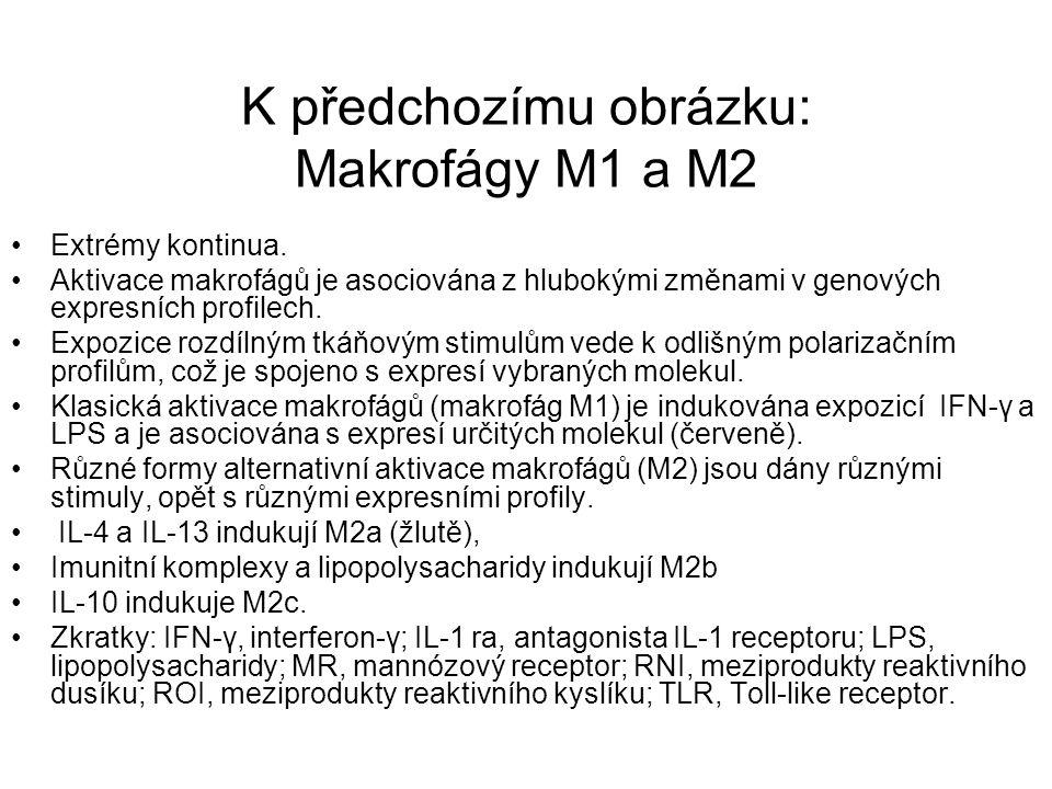 K předchozímu obrázku: Makrofágy M1 a M2 Extrémy kontinua. Aktivace makrofágů je asociována z hlubokými změnami v genových expresních profilech. Expoz