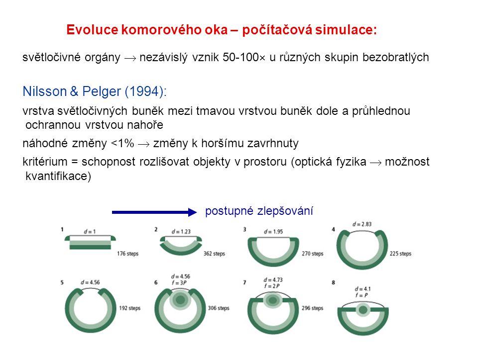 světločivné orgány  nezávislý vznik 50-100  u různých skupin bezobratlých Nilsson & Pelger (1994): vrstva světločivných buněk mezi tmavou vrstvou bu