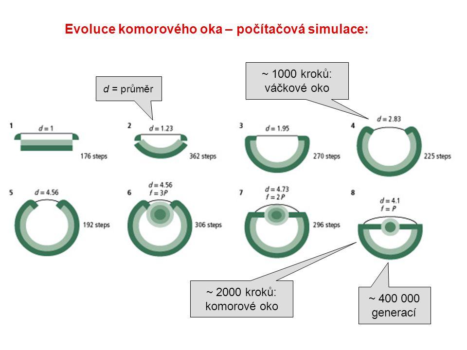  1000 kroků: váčkové oko  2000 kroků: komorové oko  400 000 generací d = průměr