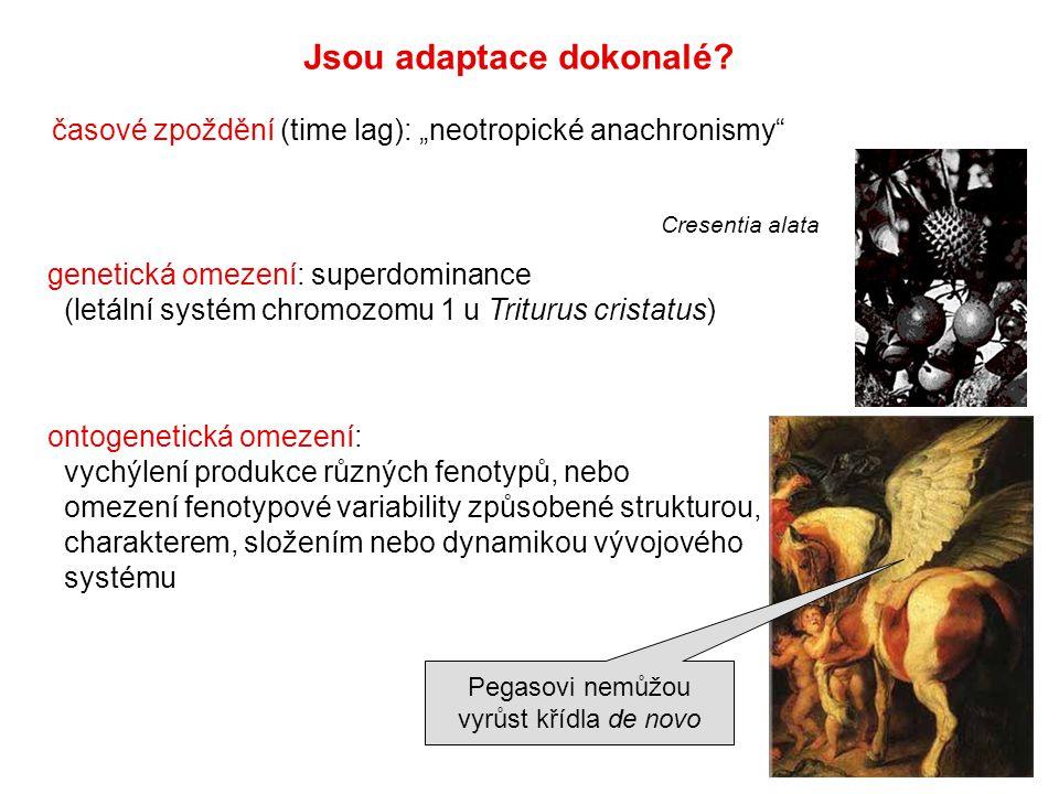 """Jsou adaptace dokonalé? časové zpoždění (time lag): """"neotropické anachronismy"""" genetická omezení: superdominance (letální systém chromozomu 1 u Tritur"""