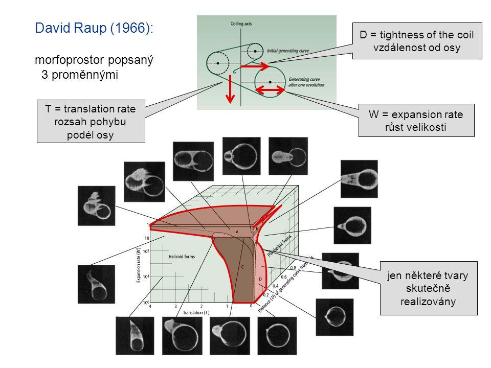 David Raup (1966): morfoprostor popsaný 3 proměnnými W = expansion rate růst velikosti D = tightness of the coil vzdálenost od osy T = translation rat