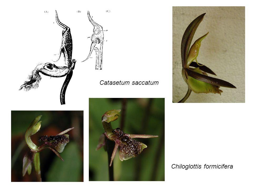 Jak může být funkční poloviční oko nebo poloviční křídlo.