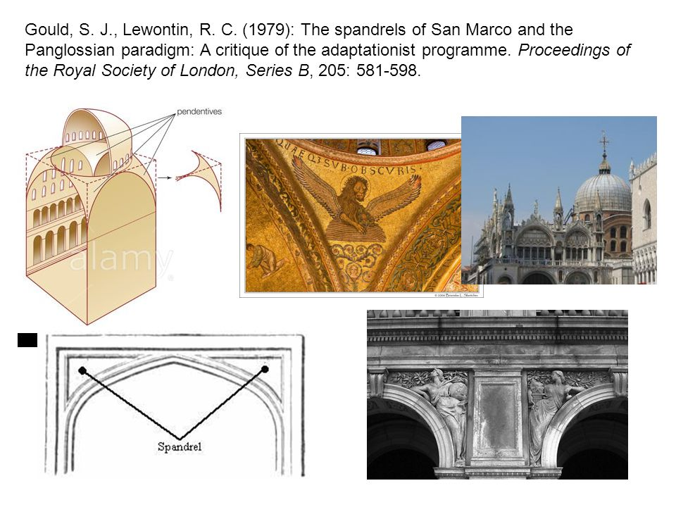 Gould, S. J., Lewontin, R. C. (1979): The spandrels of San Marco and the Panglossian paradigm: A critique of the adaptationist programme. Proceedings