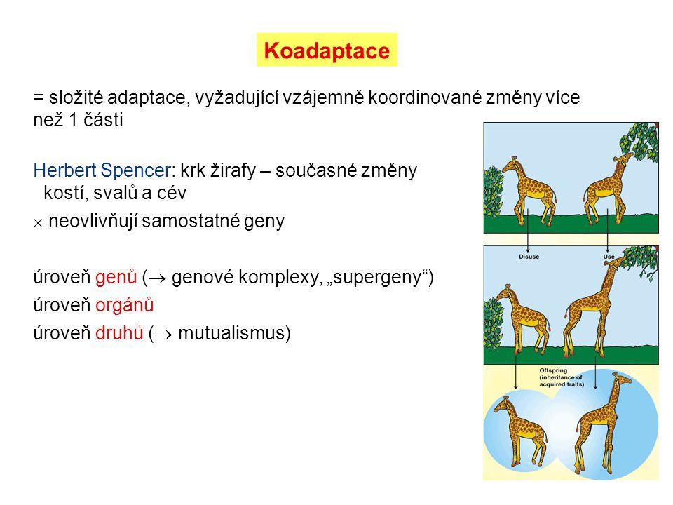 Koadaptace = složité adaptace, vyžadující vzájemně koordinované změny více než 1 části Herbert Spencer: krk žirafy – současné změny kostí, svalů a cév