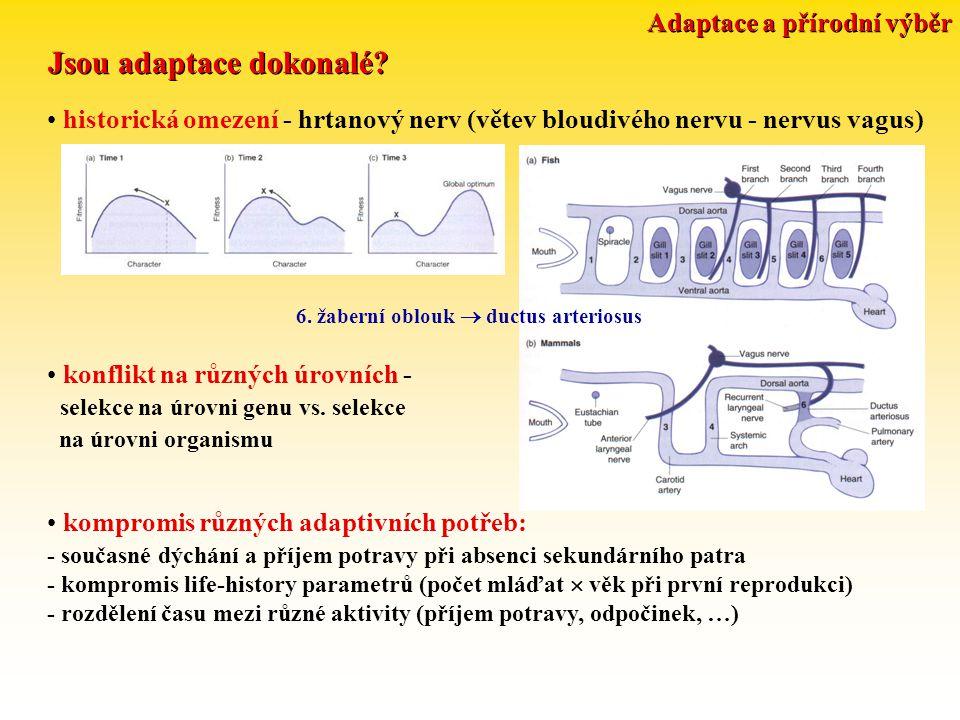 Adaptace a přírodní výběr Metody studia adaptací: strukturní složitost účelnost, demonstrování funkce: Bergmannovo a Allenovo pravidlo, křídlo sokola a krahujce atd.