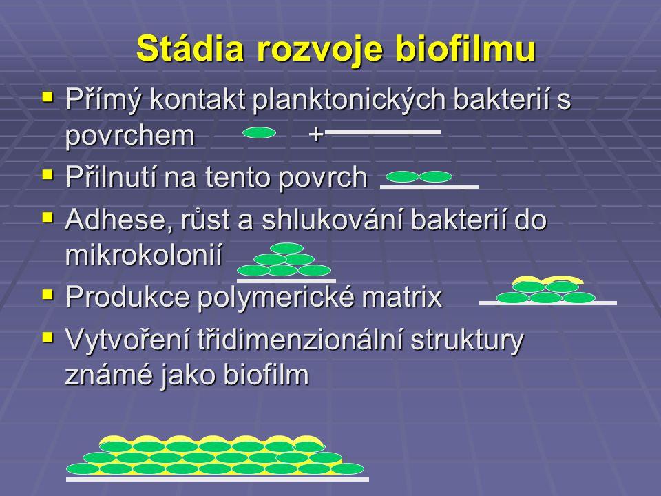 Stádia rozvoje biofilmu  Přímý kontakt planktonických bakterií s povrchem +  Přilnutí na tento povrch  Adhese, růst a shlukování bakterií do mikrok