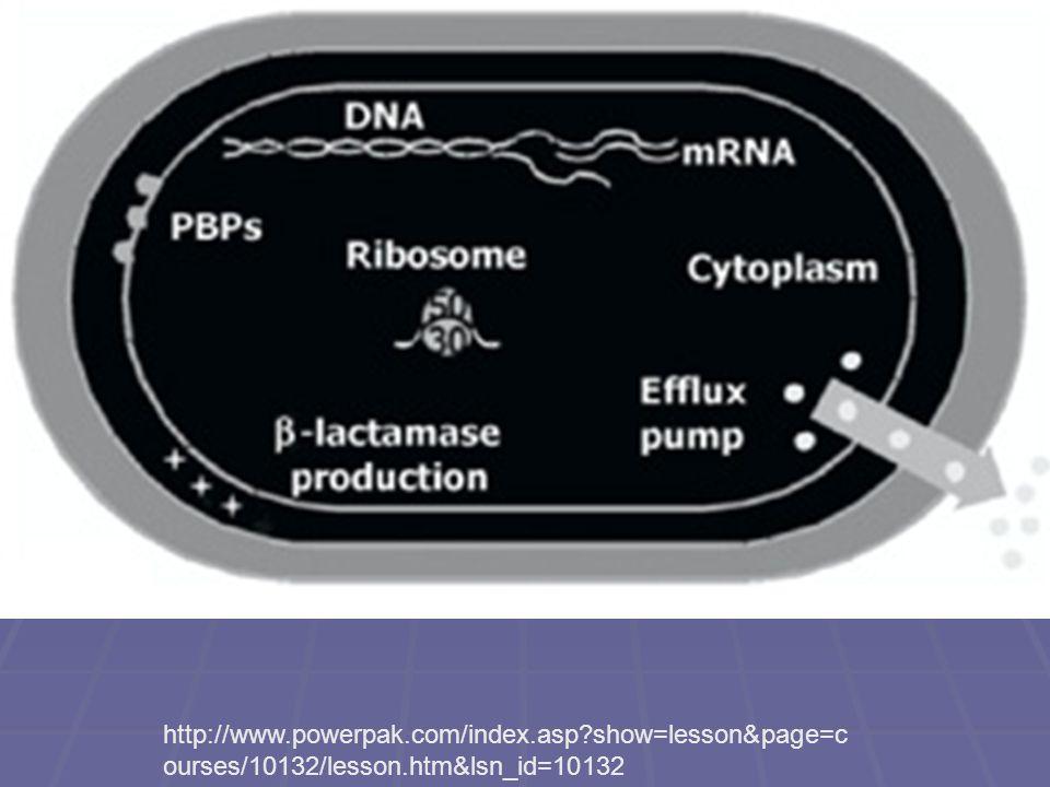 Silnější chinolon (ciprofloxacin) je ještě účinný, slabší už ne.