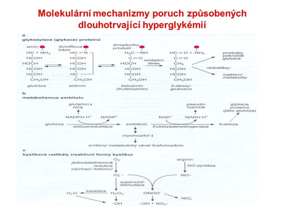Molekulární mechanizmy poruch způsobených dlouhotrvající hyperglykémií