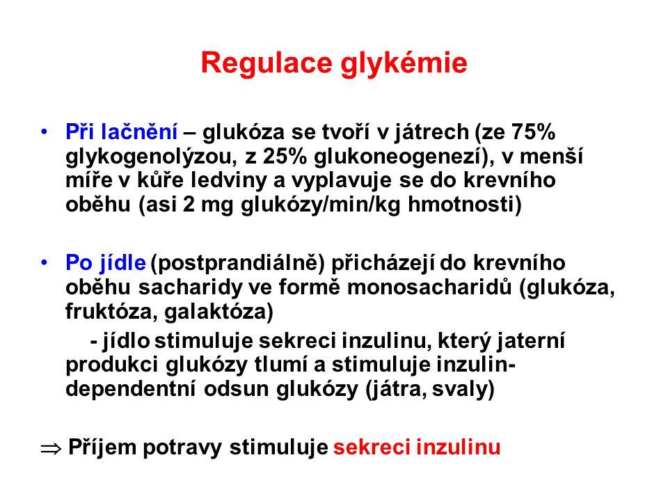 Regulace glykémie Při lačnění – glukóza se tvoří v játrech (ze 75% glykogenolýzou, z 25% glukoneogenezí), v menší míře v kůře ledviny a vyplavuje se d