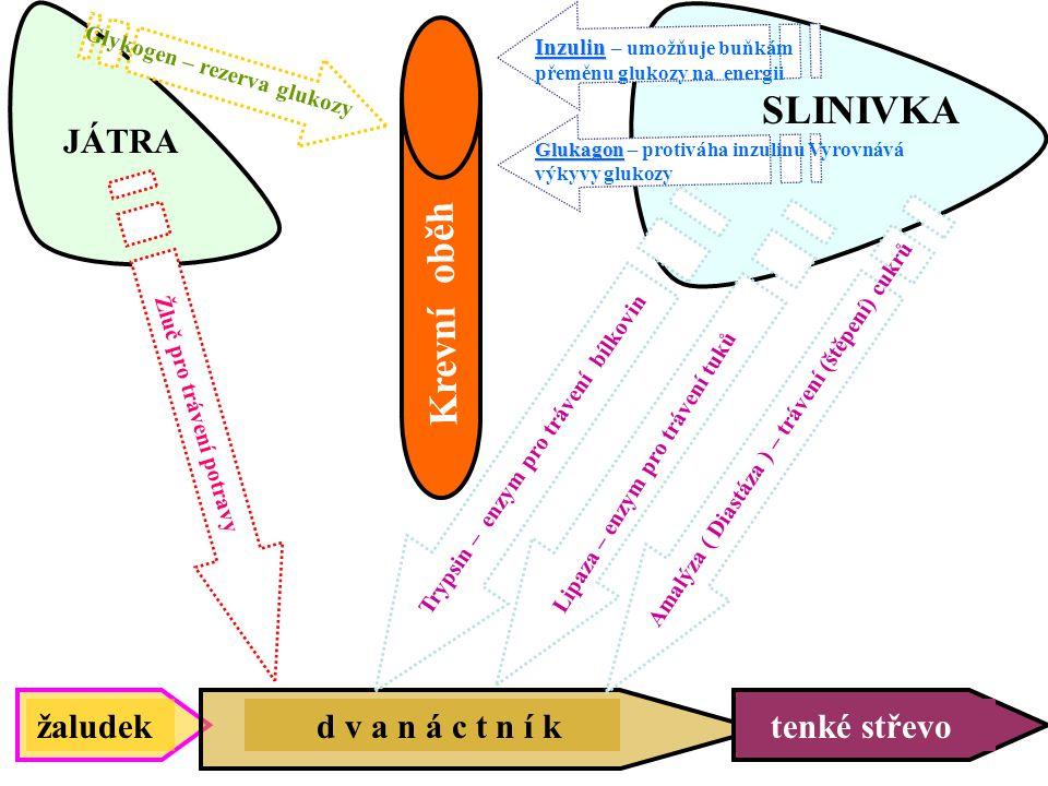 Endokrinní funkce pankreatu Langerhansovy ostrůvky:  buňky (B-buňky): inzulin (proinzulin), amylin a GABA  buňky (A-buňky): glukagon, glukagonu podobné peptidy (GLP-1 a GLP-2)  buňky (D-buňky): somatostatin, VIP Buňky typu F: pankreatický polypeptid (PP)