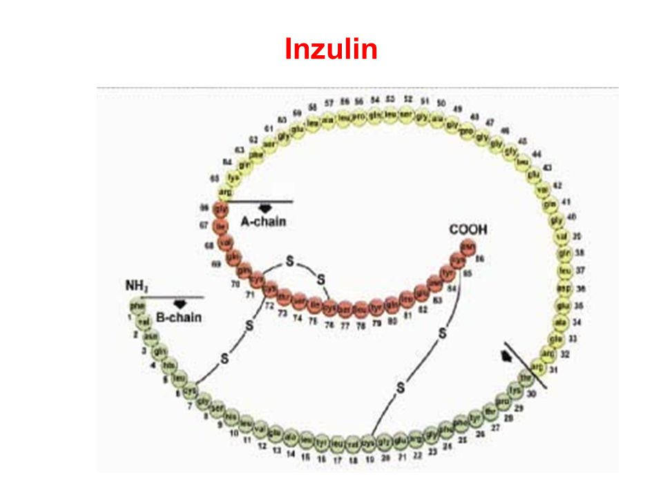 Syntéza inzulinu
