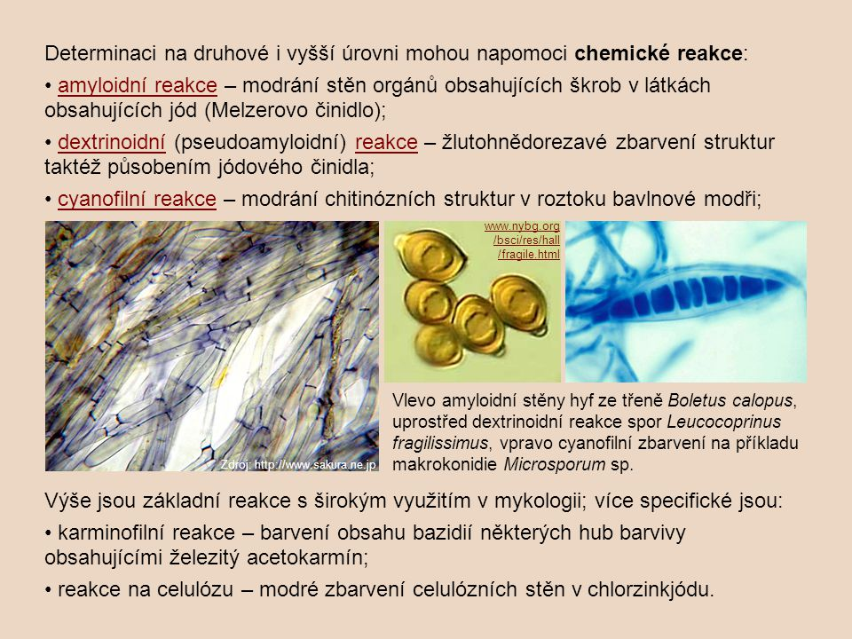 Determinaci na druhové i vyšší úrovni mohou napomoci chemické reakce: amyloidní reakce – modrání stěn orgánů obsahujících škrob v látkách obsahujících