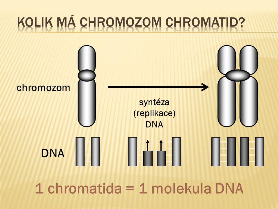  spojení mezi sesterskými chromozomy se přeruší  oddělení chromozomů v centromerách  úplné rozdělení sesterských chromatid  vznikají dceřiné chromozomy  zkracováním mikrotubulů dělícího vřeténka  chromozomy putují k pólům buňky