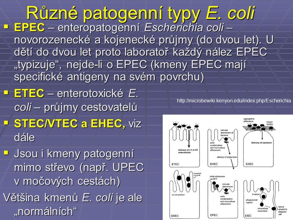 Různé patogenní typy E. coli  EPEC – enteropatogenní Escherichia coli – novorozenecké a kojenecké průjmy (do dvou let). U dětí do dvou let proto labo