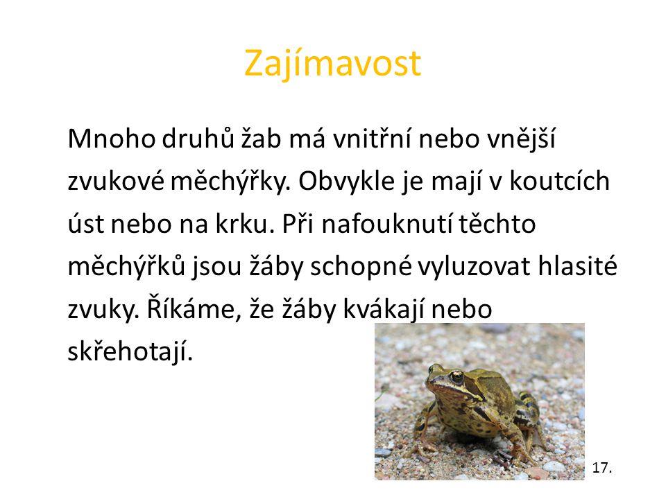 Zajímavost Mnoho druhů žab má vnitřní nebo vnější zvukové měchýřky. Obvykle je mají v koutcích úst nebo na krku. Při nafouknutí těchto měchýřků jsou ž