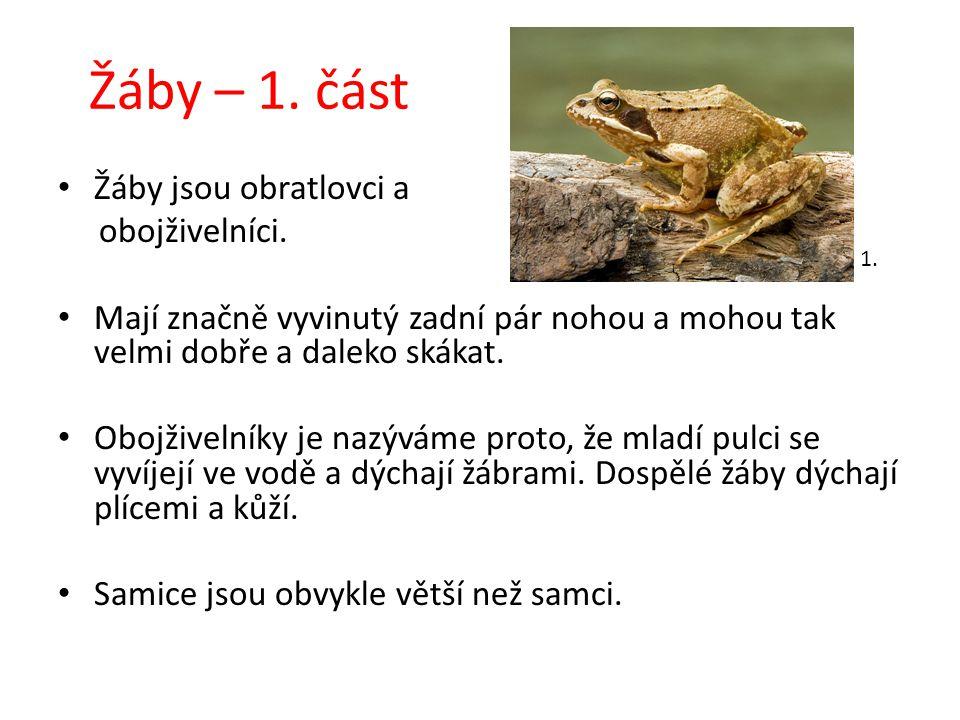 Žáby – 1. část Žáby jsou obratlovci a obojživelníci. Mají značně vyvinutý zadní pár nohou a mohou tak velmi dobře a daleko skákat. Obojživelníky je na