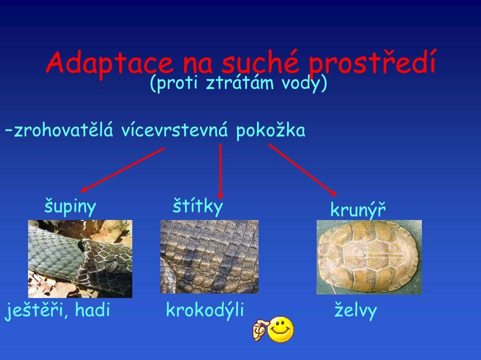 Adaptace na suché prostředí –zrohovatělá vícevrstevná pokožka (proti ztrátám vody)  šupiny ještěři, hadi štítky krokodýli krunýř želvy