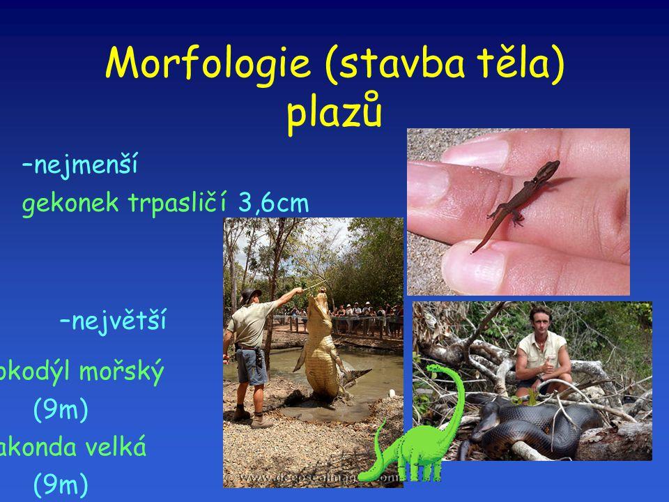 Morfologie (stavba těla) plazů –nejmenší gekonek trpasličí 3,6cm –největší krokodýl mořský (9m)  anakonda velká (9m) 