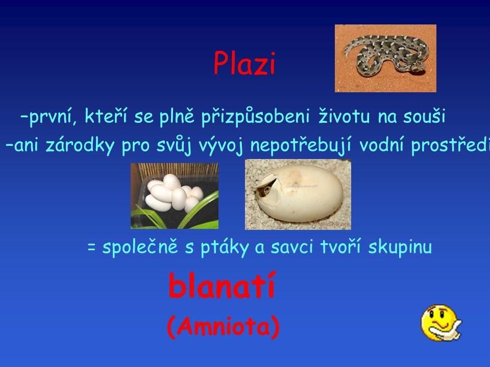 Kostra plazů hrudní koš (dýchají jen plícemi = mezižeberní svaly)  had želva chameleon