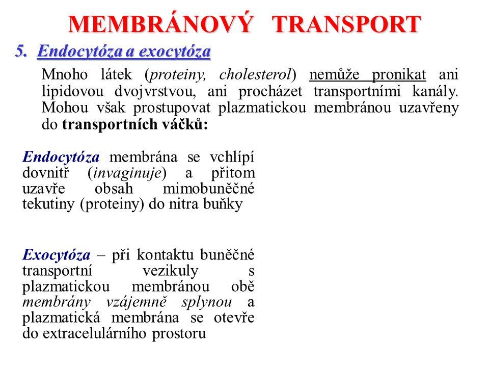 5. Endocytóza a exocytóza Mnoho látek (proteiny, cholesterol) nemůže pronikat ani lipidovou dvojvrstvou, ani procházet transportními kanály. Mohou vša