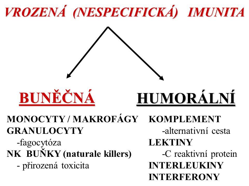 VROZENÁ (NESPECIFICKÁ) IMUNITA BUNĚČNÁ HUMORÁLNÍ MONOCYTY / MAKROFÁGY GRANULOCYTY -fagocytóza NK BUŇKY (naturale killers) - přirozená toxicita KOMPLEMENT -alternativní cesta LEKTINY -C reaktivní protein INTERLEUKINY INTERFERONY