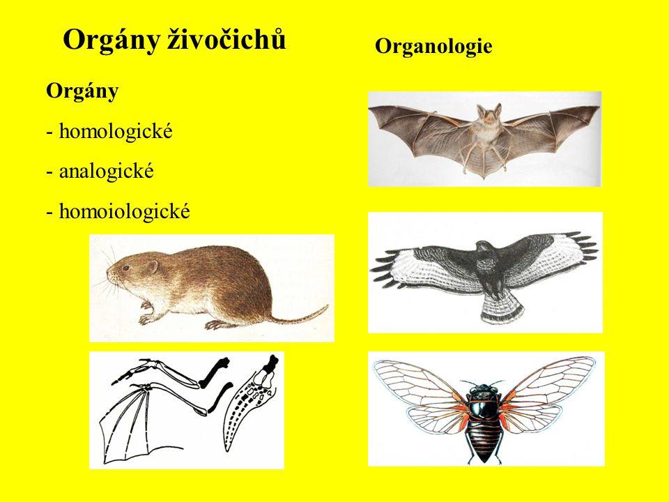 Orgány živočichů Organologie Orgány - homologické - analogické - homoiologické
