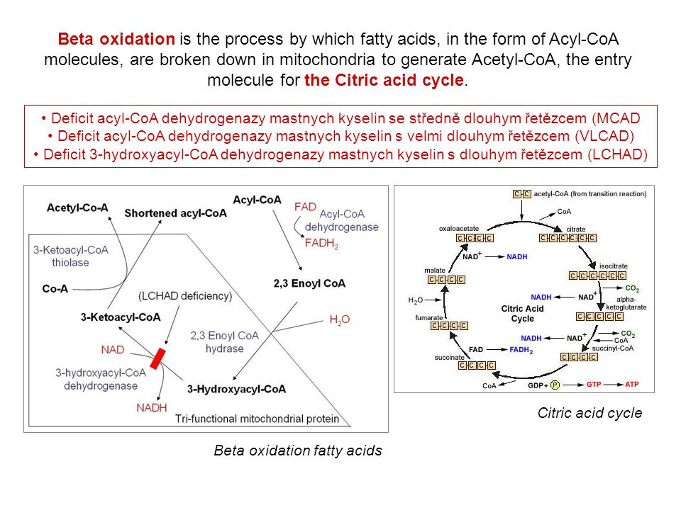 Beta oxidation is the process by which fatty acids, in the form of Acyl-CoA molecules, are broken down in mitochondria to generate Acetyl-CoA, the entry molecule for the Citric acid cycle.