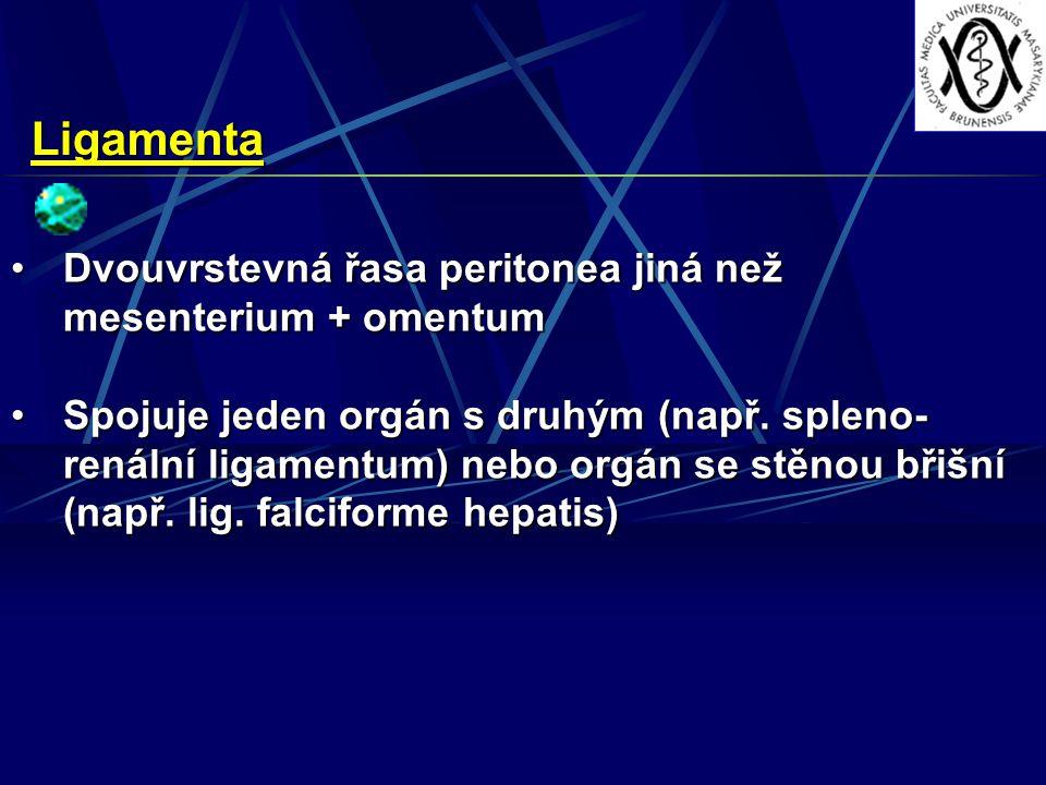 Ligamenta Dvouvrstevná řasa peritonea jiná než mesenterium + omentumDvouvrstevná řasa peritonea jiná než mesenterium + omentum Spojuje jeden orgán s druhým (např.