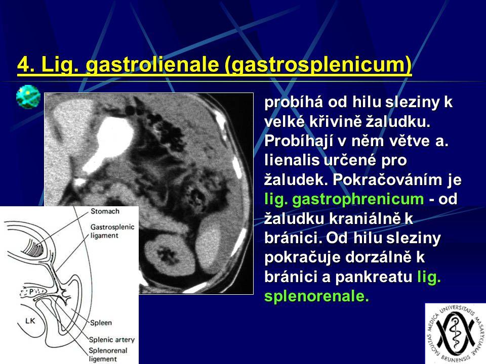 4. Lig. gastrolienale (gastrosplenicum) probíhá od hilu sleziny k velké křivině žaludku. Probíhají v něm větve a. lienalis určené pro žaludek. Pokračo