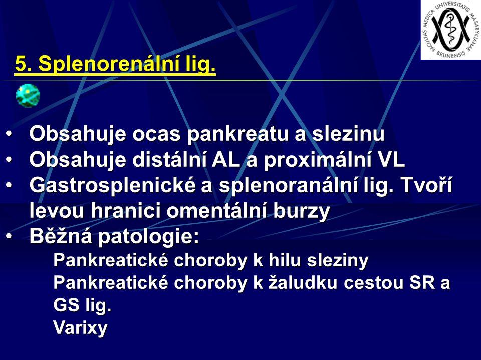 5. Splenorenální lig. Obsahuje ocas pankreatu a slezinuObsahuje ocas pankreatu a slezinu Obsahuje distální AL a proximální VLObsahuje distální AL a pr