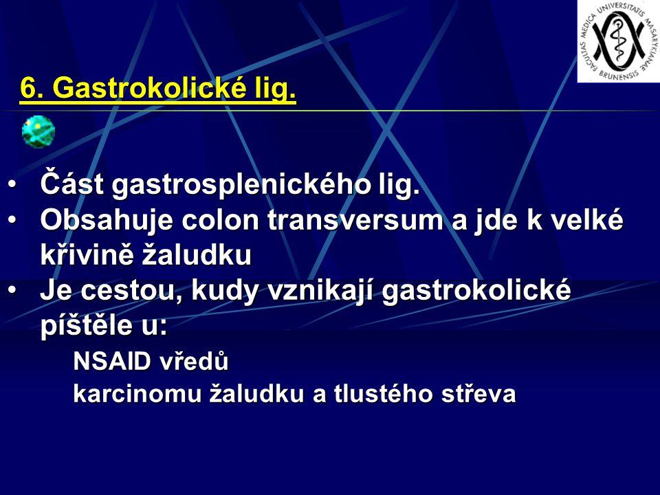 6. Gastrokolické lig. Část gastrosplenického lig.Část gastrosplenického lig. Obsahuje colon transversum a jde k velké křivině žaludkuObsahuje colon tr