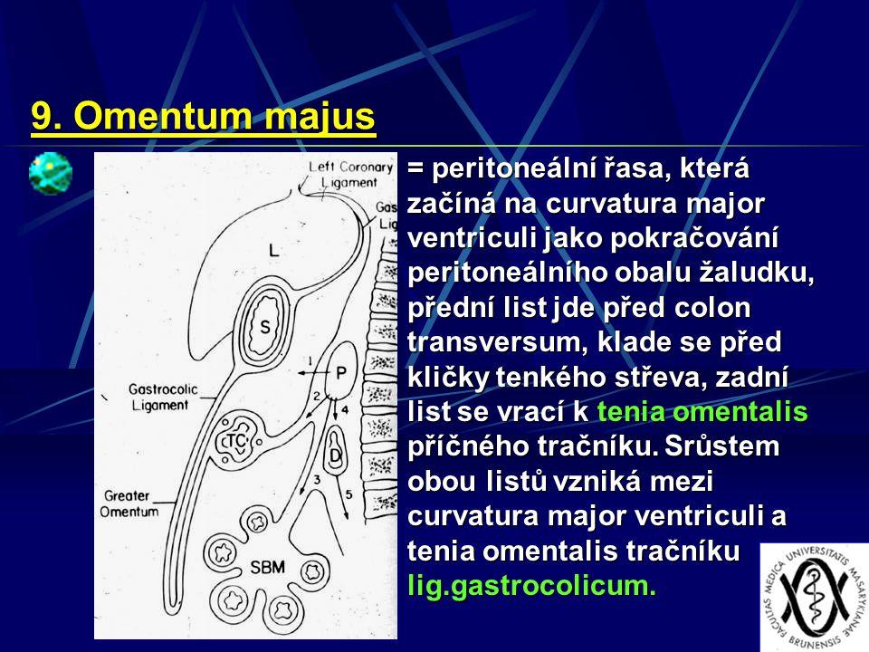 9. Omentum majus = peritoneální řasa, která začíná na curvatura major ventriculi jako pokračování peritoneálního obalu žaludku, přední list jde před c