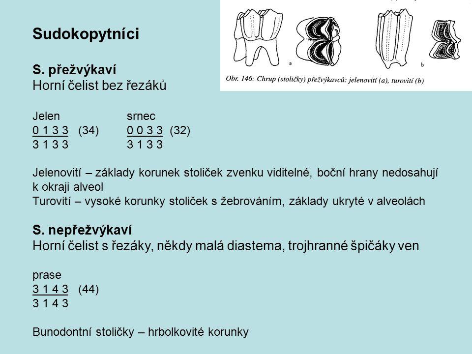 Sudokopytníci S. přežvýkaví Horní čelist bez řezáků Jelensrnec 0 1 3 3 (34) 0 0 3 3 (32)3 1 3 3 Jelenovití – základy korunek stoliček zvenku viditelné