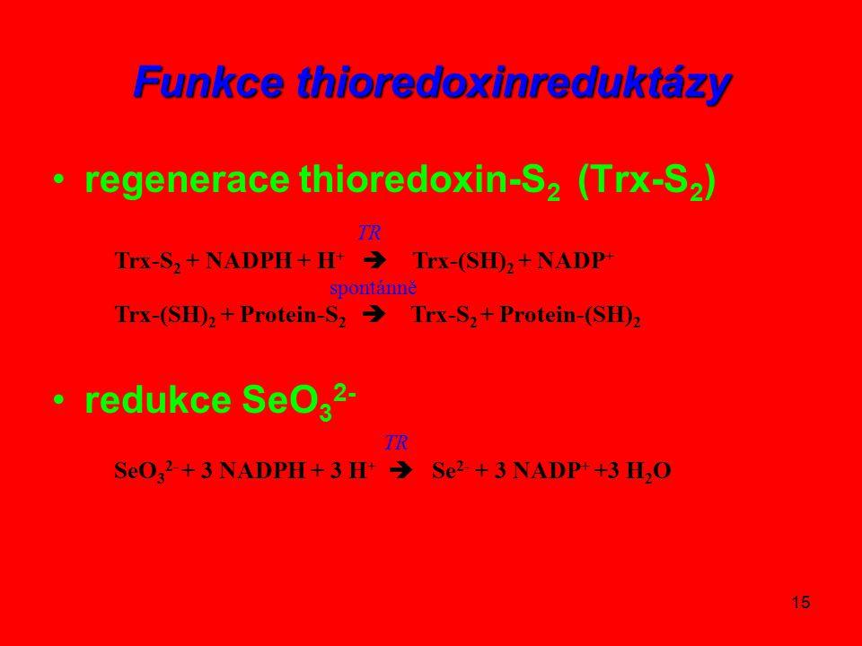 15 Funkce thioredoxinreduktázy regenerace thioredoxin-S 2 (Trx-S 2 ) redukce SeO 3 2- TR Trx-S 2 + NADPH + H +  Trx-(SH) 2 + NADP + spontánně Trx-(SH) 2 + Protein-S 2  Trx-S 2 + Protein-(SH) 2 TR SeO 3 2- + 3 NADPH + 3 H +  Se 2- + 3 NADP + +3 H 2 O