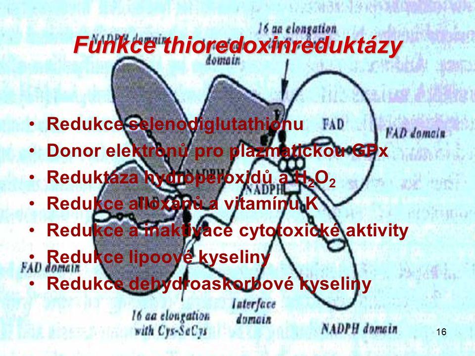 16 Funkce thioredoxinreduktázy Redukce selenodiglutathionu Donor elektronů pro plazmatickou GPx Reduktáza hydroperoxidů a H 2 O 2 Redukce alloxanů a vitamínu K Redukce a inaktivace cytotoxické aktivity Redukce lipoové kyseliny Redukce dehydroaskorbové kyseliny