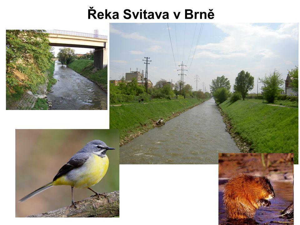 Řeka Svitava v Brně