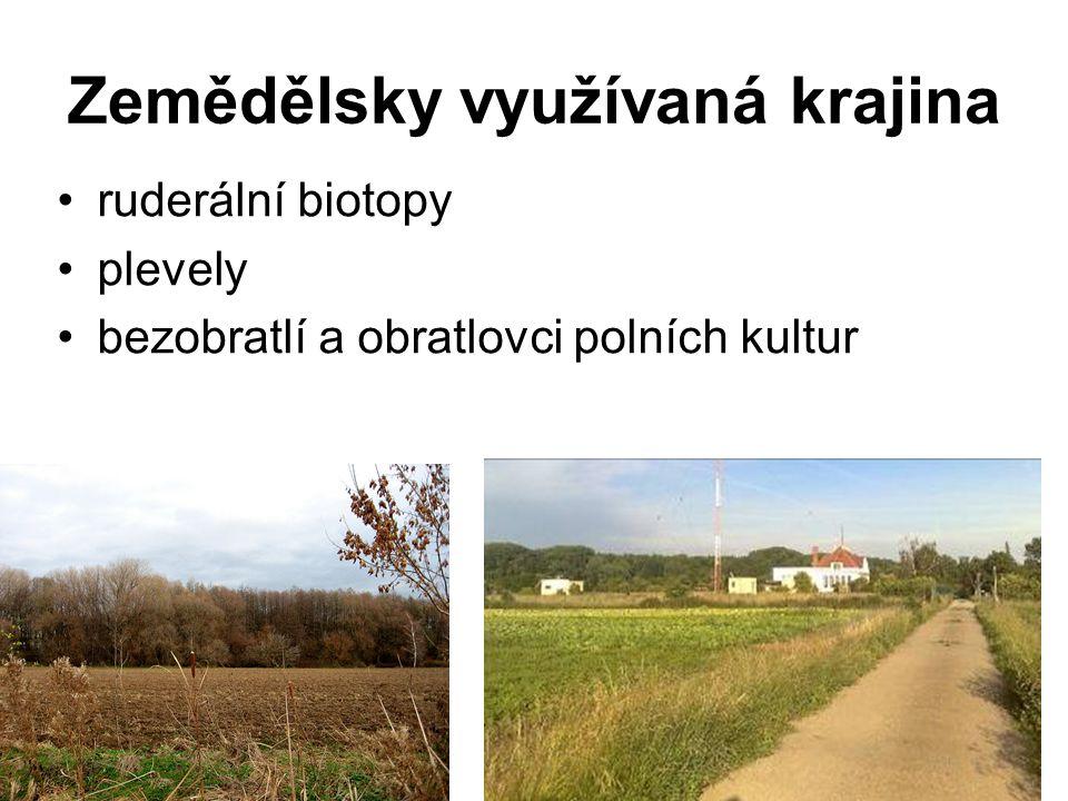 Zemědělsky využívaná krajina ruderální biotopy plevely bezobratlí a obratlovci polních kultur
