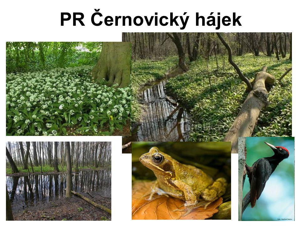 PR Černovický hájek