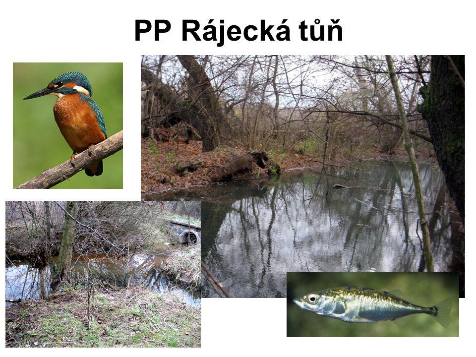 PP Rájecká tůň