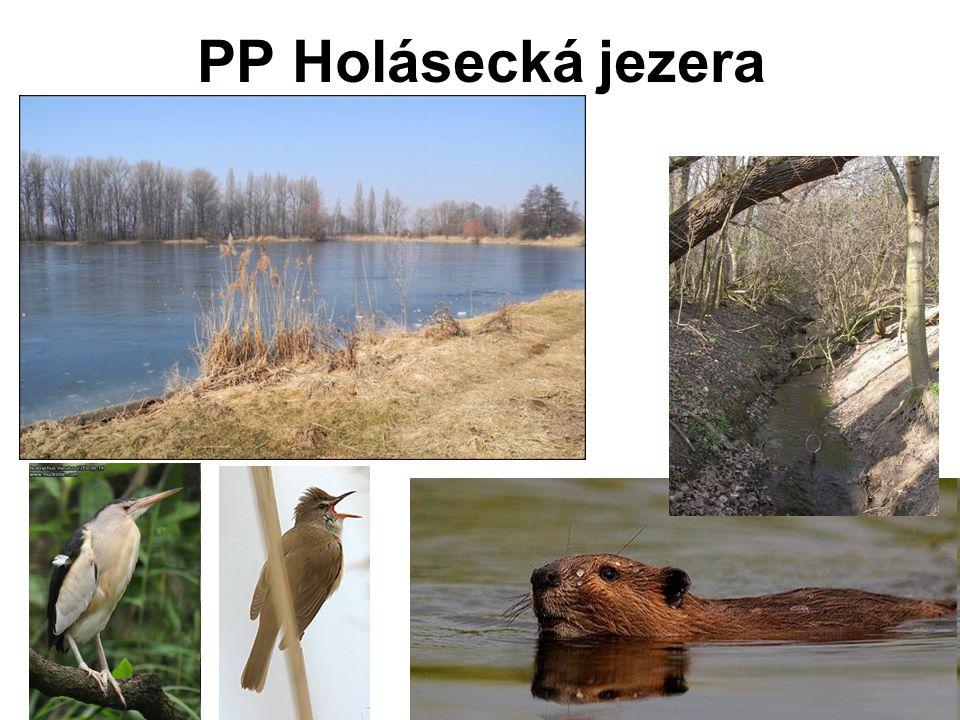 PP Holásecká jezera