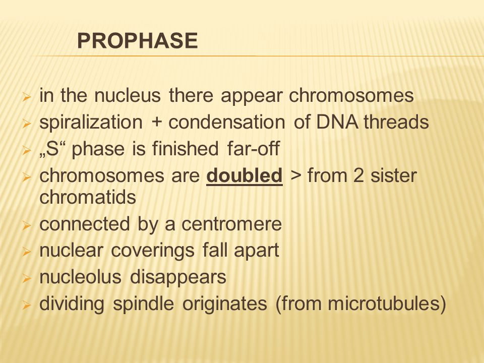 " in the nucleus there appear chromosomes  spiralization + condensation of DNA threads  ""S phase is finished far-off  chromosomes are doubled > from 2 sister chromatids  connected by a centromere  nuclear coverings fall apart  nucleolus disappears  dividing spindle originates (from microtubules) PROPHASE"