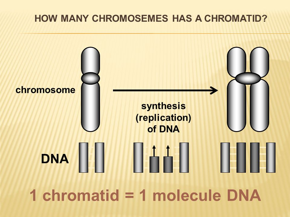  connection between sister chromosomes interrupts  separation of chromosomes in centromeres  complete division of sister chromatids  daughter chromosomes develop  Shortening of microtubules of the division spindle  chromosomes travel to the poles of the cell ANAPHASE