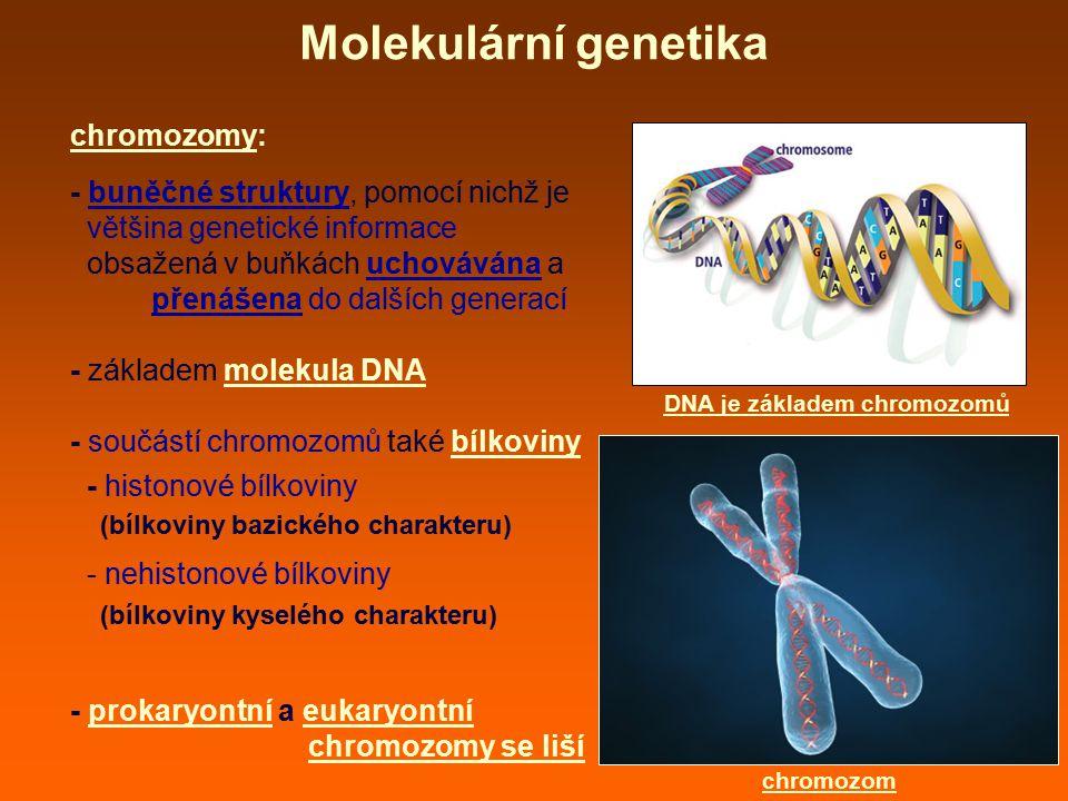 Molekulární genetika chromozomy: - buněčné struktury, pomocí nichž je většina genetické informace obsažená v buňkách uchovávána a přenášena do dalších generací - základem molekula DNA - součástí chromozomů také bílkoviny - histonové bílkoviny (bílkoviny bazického charakteru) - nehistonové bílkoviny (bílkoviny kyselého charakteru) - prokaryontní a eukaryontní chromozomy se liší chromozom DNA je základem chromozomů