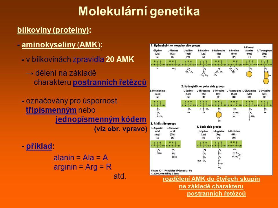 bílkoviny (proteiny): - aminokyseliny (AMK): - v bílkovinách zpravidla 20 AMK → dělení na základě charakteru postranních řetězců - označovány pro úspo