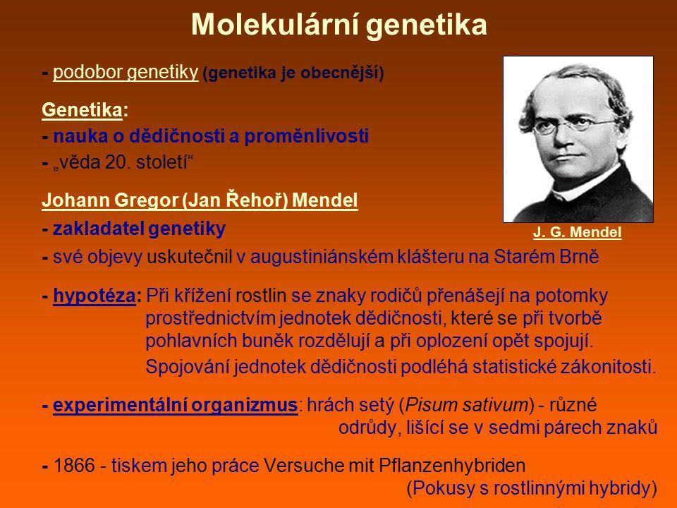 Molekulární genetika - vědní obor, zabývající se přenosem genetické informace do dalších generací buněk či organizmů (dědičností) a vyjádřením této genetické informace (její expresí) - genetická informace - představuje většinu vnitřní informace buněk (většinu buněčné paměti) - je zapsána do struktury nukleových kyselin (zejména do DNA - deoxyribonukleová kyselina) - stojí na počátku každého živého organizmu - určuje budoucí anatomickou stavbu organizmu, je nepostradatelnou součástí pohlavního i nepohlavního rozmnožování atd.
