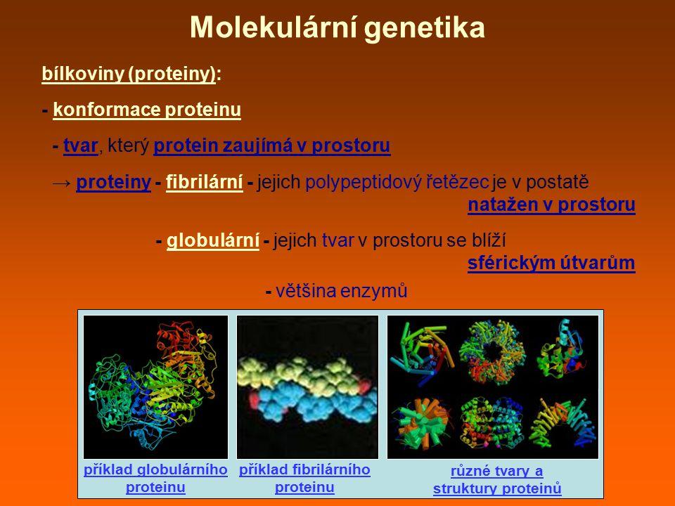 bílkoviny (proteiny): - konformace proteinu - tvar, který protein zaujímá v prostoru → proteiny - fibrilární - jejich polypeptidový řetězec je v posta